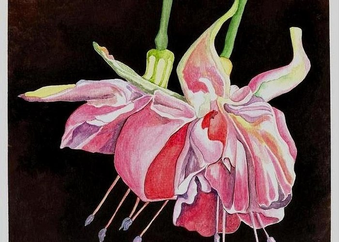 Art Greeting Card featuring the painting Pink Fuscia by Carol Sabo