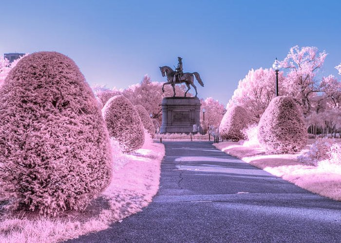 Boston Greeting Card featuring the photograph Pink Garden by Bryan Xavier
