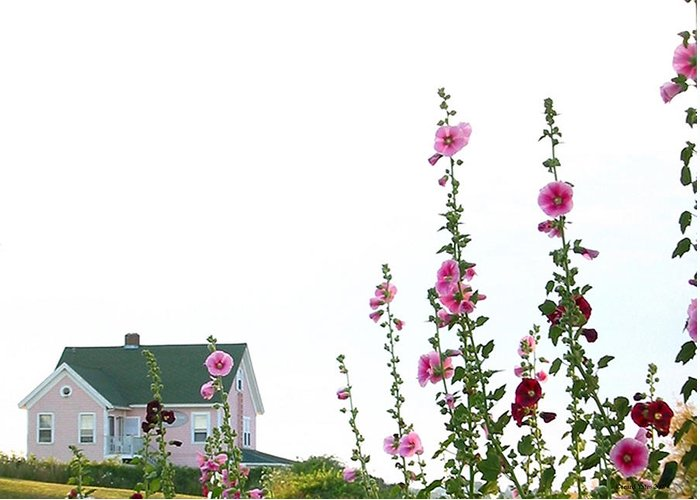 Island Greeting Card featuring the photograph Pink House by Gerard Yates