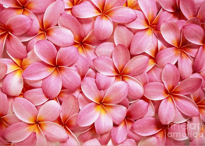 Aloha Greeting Card featuring the photograph Pink Plumeria by Kyle Rothenborg - Printscapes
