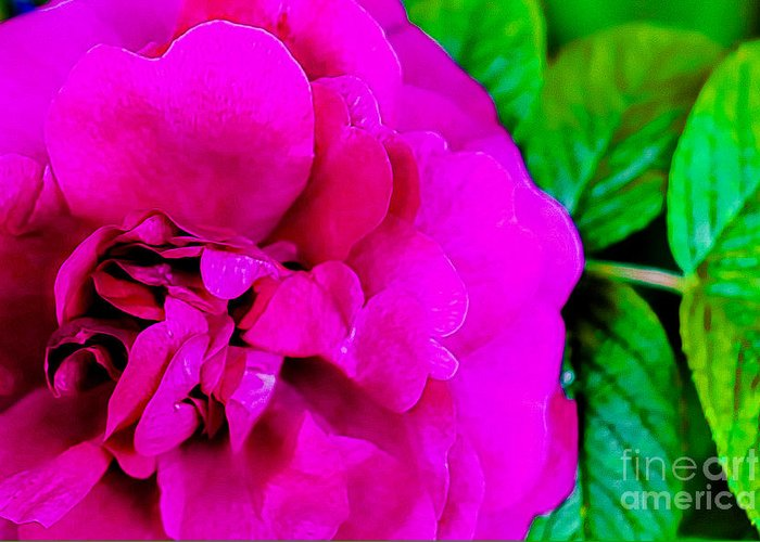 Pink Greeting Card featuring the photograph Pink Rose by Amber D Hathaway Photography