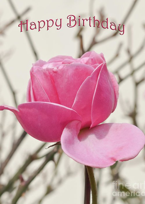 Flower Greeting Card Featuring The Photograph Pink Rose Happy Birthday By Terri Waters