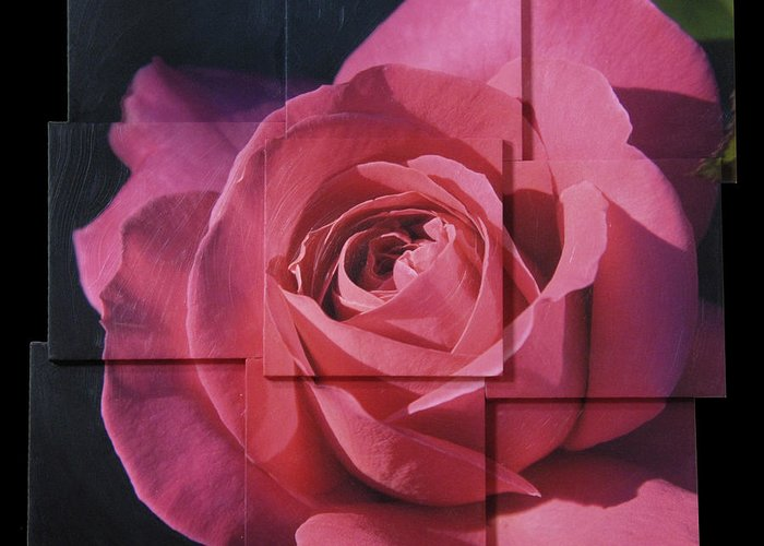 Rose Greeting Card featuring the sculpture Pink Rose Photo Sculpture by Michael Bessler