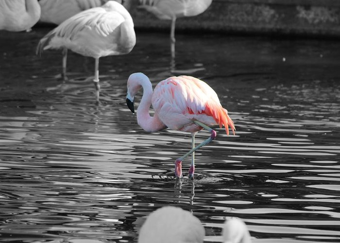 Palm Desert California Greeting Card featuring the photograph Pinky by Colleen Cornelius