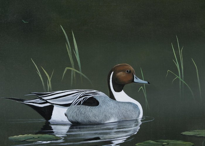 Duck Greeting Card featuring the painting Pintail Portrait by Don Griffiths