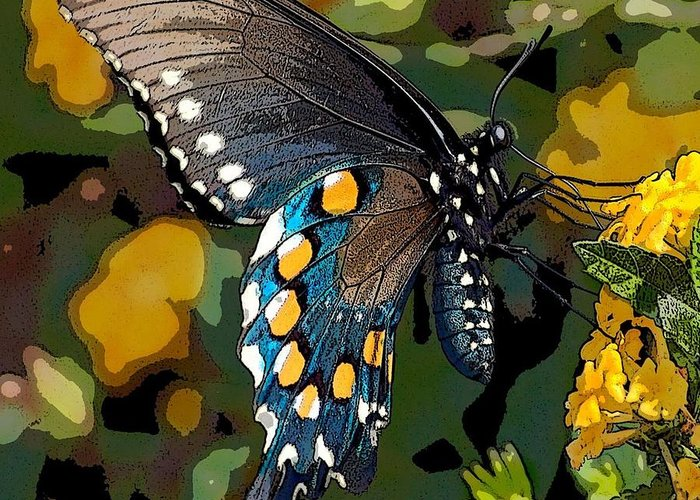 Pipevine Greeting Card featuring the photograph Pipevine Swallowtail Butterfly by David Smith