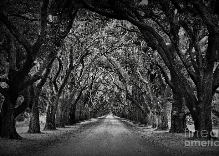Oak Alley Greeting Card featuring the photograph Plantation Oak Alley by Perry Webster