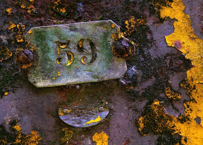 Background Greeting Card featuring the photograph Plate 59 by Carlos Caetano