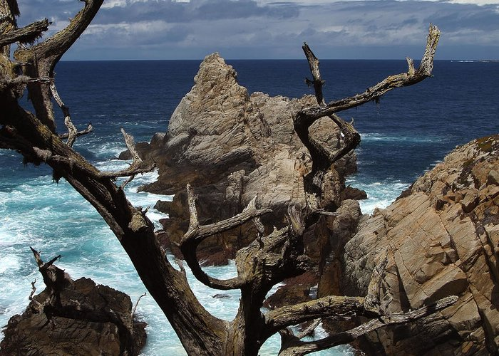 Carmel Greeting Card featuring the photograph Point Lobos Rocks and Branches by Charlene Mitchell