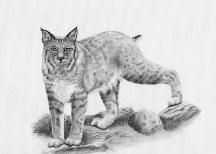 Lynx Rufus Drawings Greeting Cards