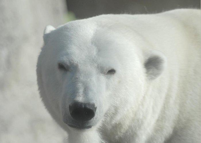 Polar Bear Greeting Card featuring the glass art Polar Bear by Curtis Gibson
