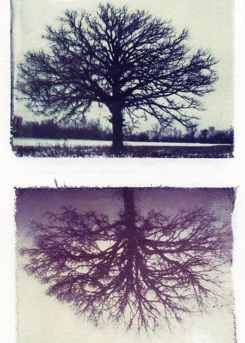 Polaroid Greeting Card featuring the photograph Polaroid Transfer Tree by Jane Linders