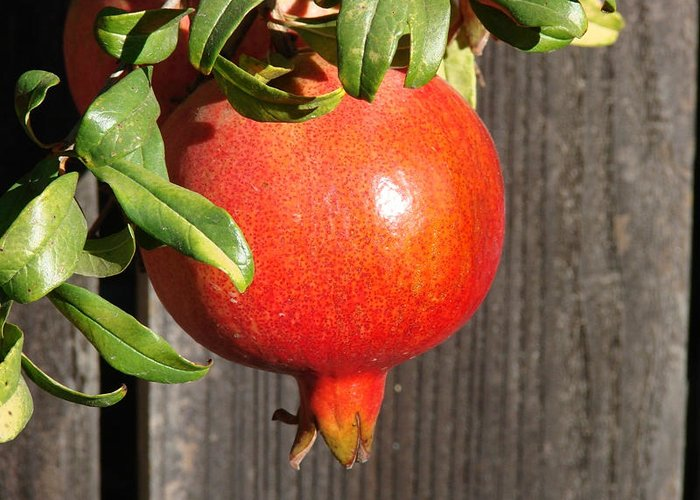 Pomegranate Greeting Card featuring the photograph Pomegranate by Liz Vernand