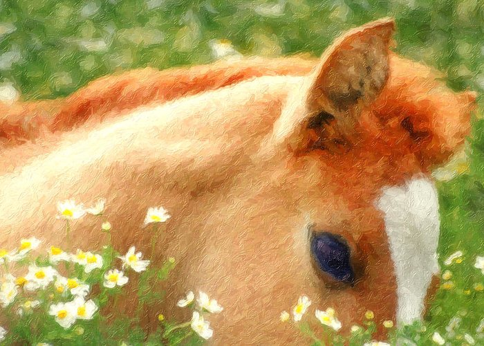 Horse Greeting Card featuring the photograph Pony In The Poppies by Tom Mc Nemar