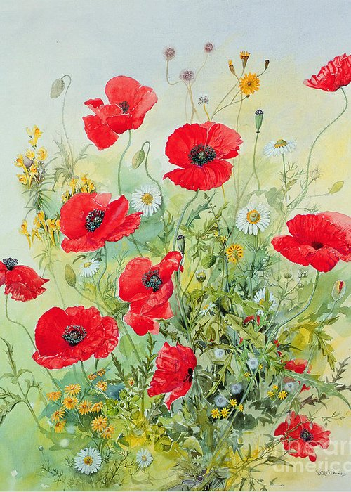 Poppy Flower Greeting Cards