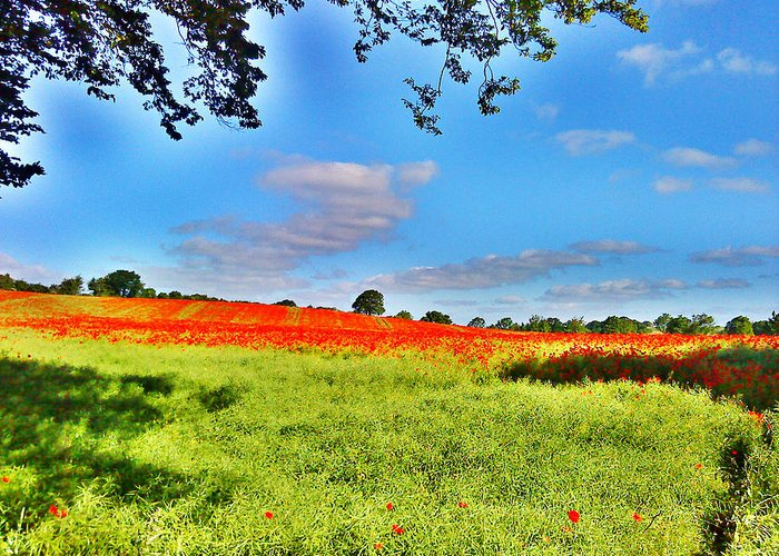 Poppy Field Greeting Card featuring the photograph Poppy Field by Sitara Bruns