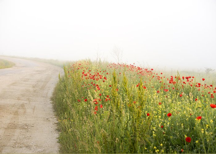 Agriculture Greeting Card featuring the photograph Poppy flower guarding the road by Adrian Bud