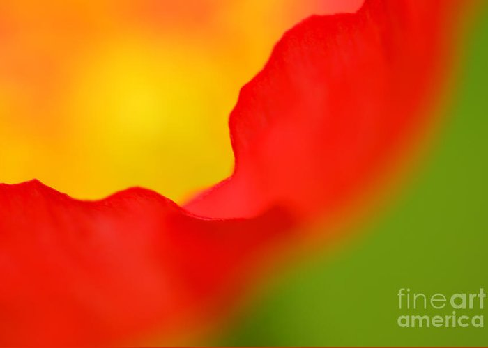 Poppy Greeting Card featuring the photograph Poppy by Silke Magino