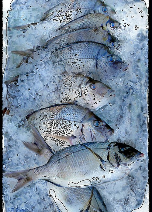 Porgy Greeting Card featuring the photograph Porgies On Ice by Dee Flouton