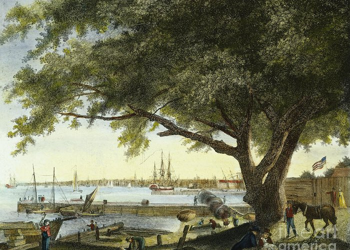 1800 Greeting Card featuring the photograph Port Of Philadelphia, 1800 by Granger
