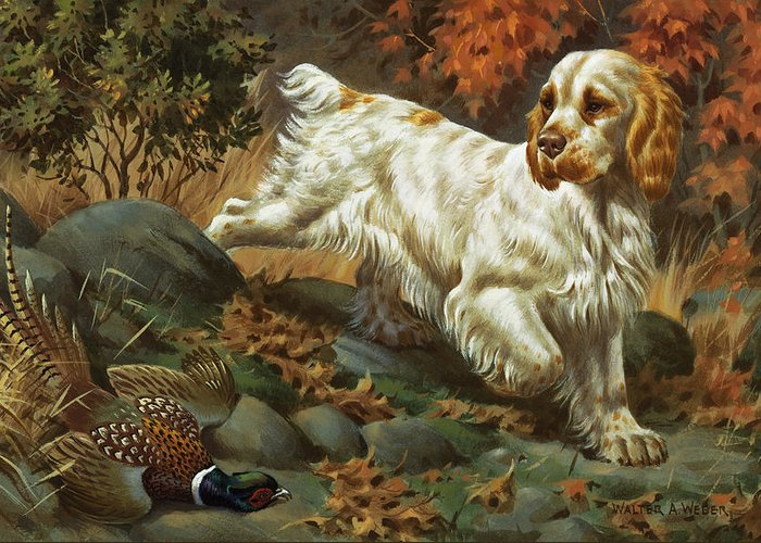 Illustration Greeting Card featuring the photograph Portrait Of A Clumber Spaniel Hunting by Walter A. Weber