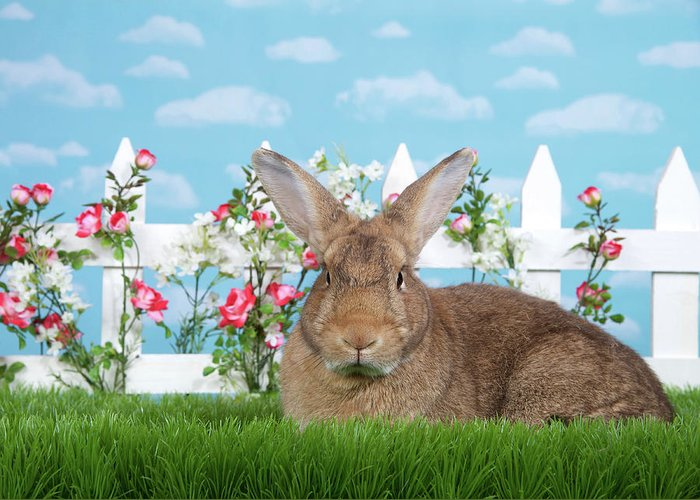 Easter Greeting Card featuring the photograph Portrait Of A Gregarious Brown Bunny by Sheila Fitzgerald