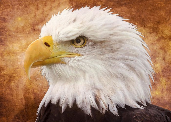 Bird Greeting Card featuring the photograph Portrait Of A Bald Eagle by Lena Photo Art