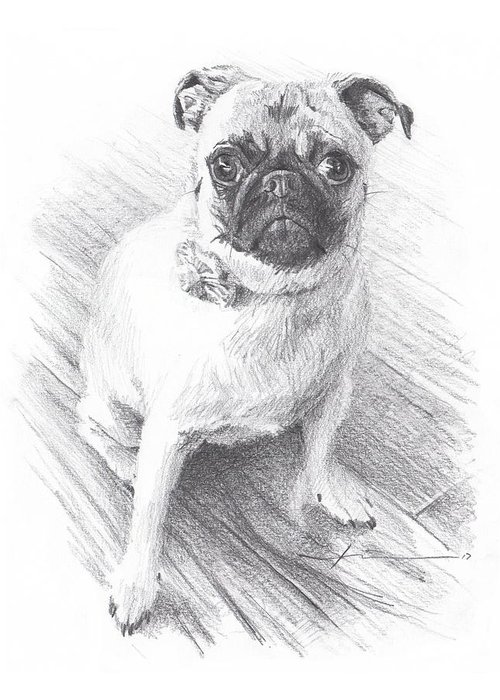 Www.miketheuer.com Posing Pug Pencil Portrait Greeting Card featuring the drawing Posing Pug by Mike Theuer