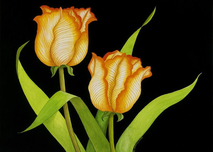 Two Orange-yellow Tulips Posing On A Black Background Greeting Card featuring the painting Posing Tulips by Carol Sabo