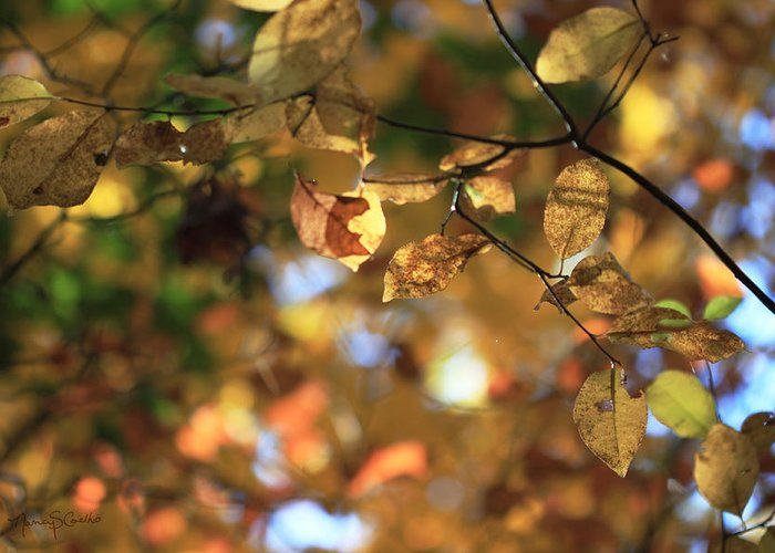 Autumn Greeting Card featuring the photograph Pot Of Gold I by Nancy Coelho