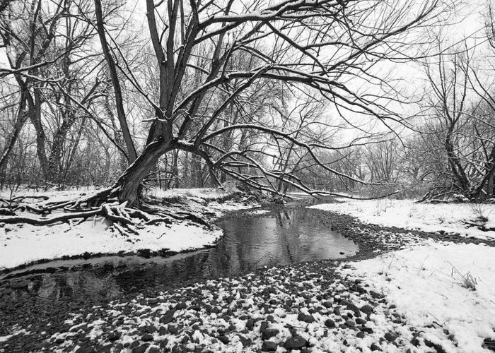 Fine Art Black And White Greeting Cards. Fine Art Black And White Snow Photography. Black And White Photographs. Fine Art Black And White Pictures. Black And White Winter Photography. Fine Art Black And White Wall Art. Wall Art Black And White. Black And White Tree Greeting Cards. Black And White River Photography. Greeting Card featuring the photograph Poudre Black And White by James Steele