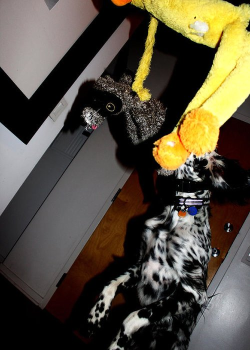 Dog Greeting Card featuring the photograph Pounced by Marley Hornewer