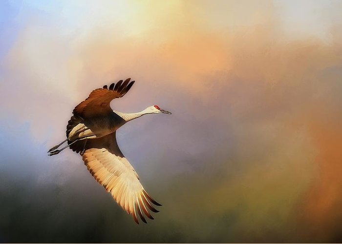 Nature Greeting Card featuring the photograph Power Stroke, Sandhill Crane, Bosque del Apache, New Mexico by Zayne Diamond Photographic