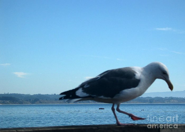 Landscape Greeting Card featuring the photograph pr 117 - A Seagull On Thr Fence by Chris Berry