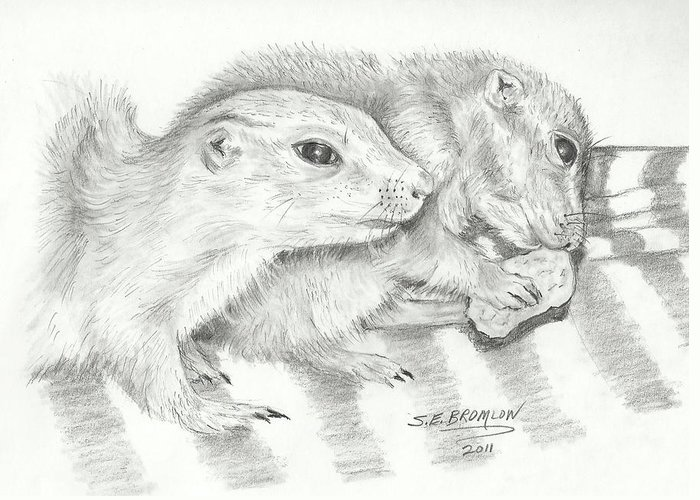\wildlife Greeting Card featuring the drawing Prairie Dogs by Susan Bromlow