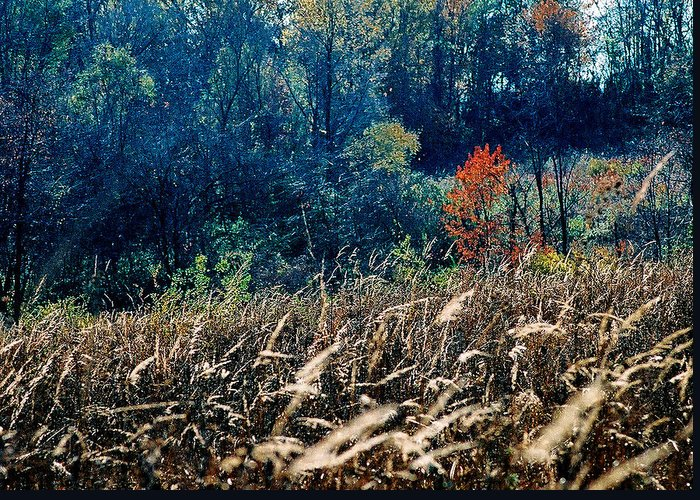 Landscape Greeting Card featuring the photograph Prairie Edge by Steve Karol