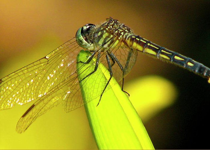 Dragonfly Greeting Card featuring the photograph Prayer Mount by Lonnie Tapia