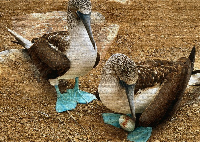 Galapagos Islands Greeting Cards