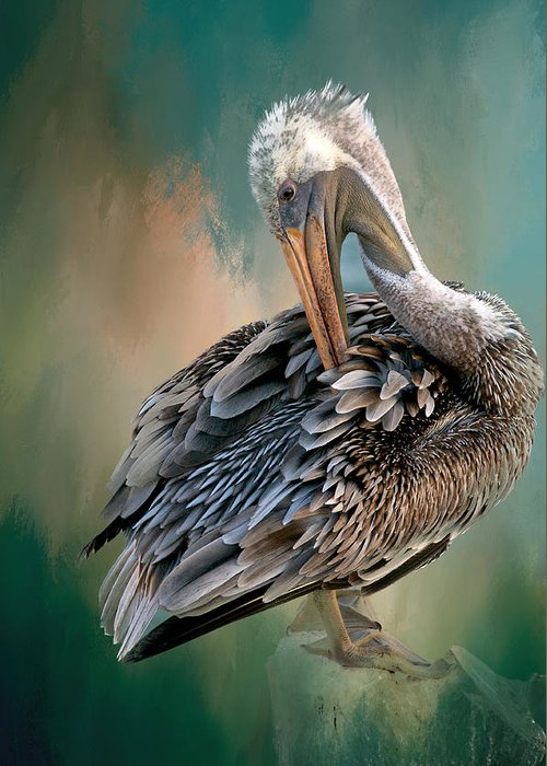 Nature Greeting Card featuring the photograph Preening Session, California Brown Pelican by Zayne Diamond Photographic