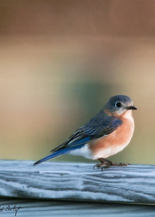 Bird Greeting Card featuring the photograph Pretty In Blue by Phill Doherty