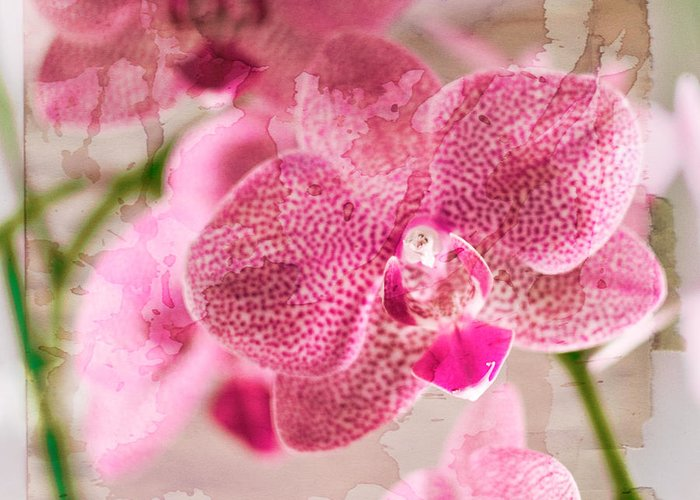 Flower Greeting Card featuring the photograph Pretty In Pink by Pamela Ellis