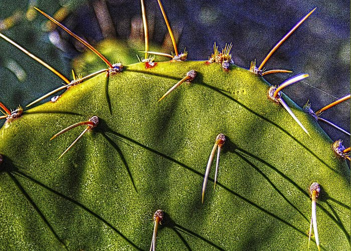 Arizona Greeting Card featuring the photograph Prickly Pear Study No. 9 by Roger Passman