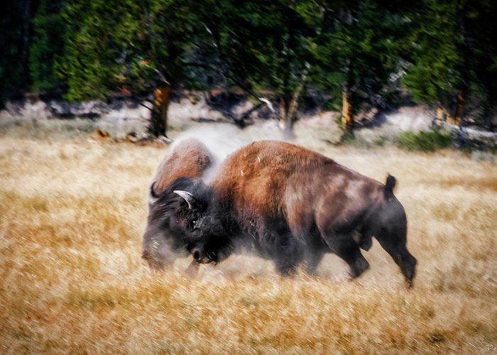 Aggression Greeting Card featuring the photograph Primal by Rick Furmanek