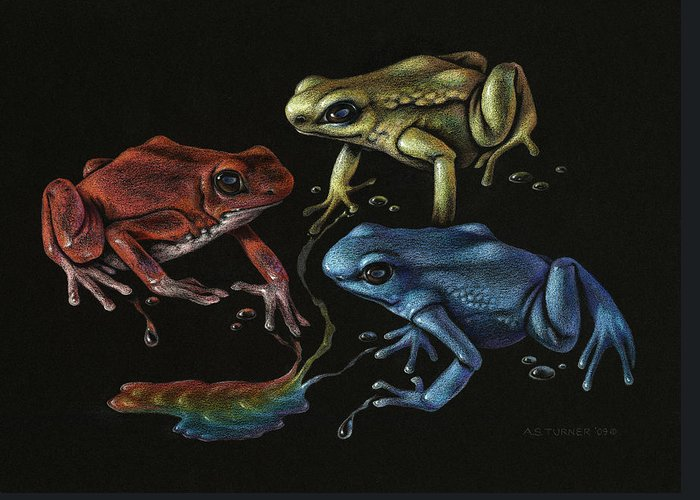 Frog Greeting Card featuring the drawing Primary Poison by Amy S Turner