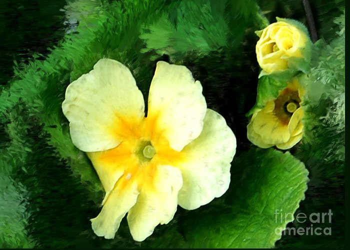 Digital Photograph Greeting Card featuring the photograph Primrose 2 by David Lane