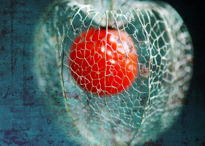 Physalis Greeting Card featuring the photograph Prison Of Love by Philippe Sainte-Laudy