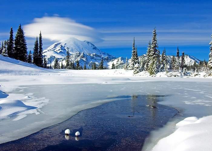 Rainier Greeting Card featuring the photograph Pristine by Mike Dawson