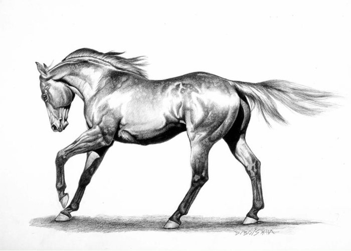 Thoroughbred Greeting Card featuring the drawing Proud by Howard Dubois