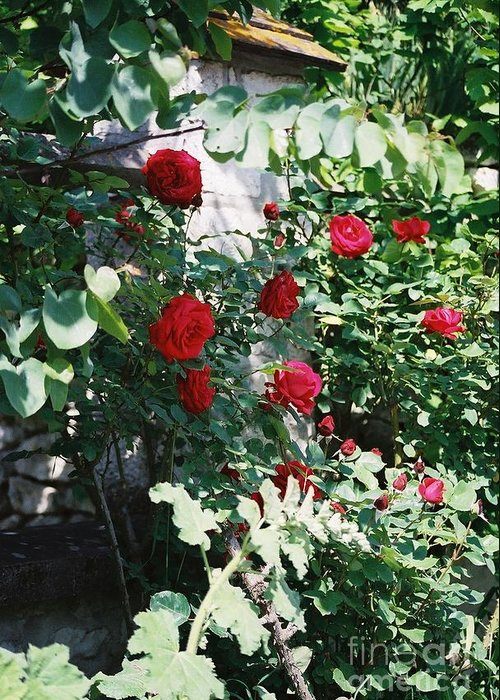 Floral Greeting Card featuring the photograph Provence Red Roses by Nadine Rippelmeyer