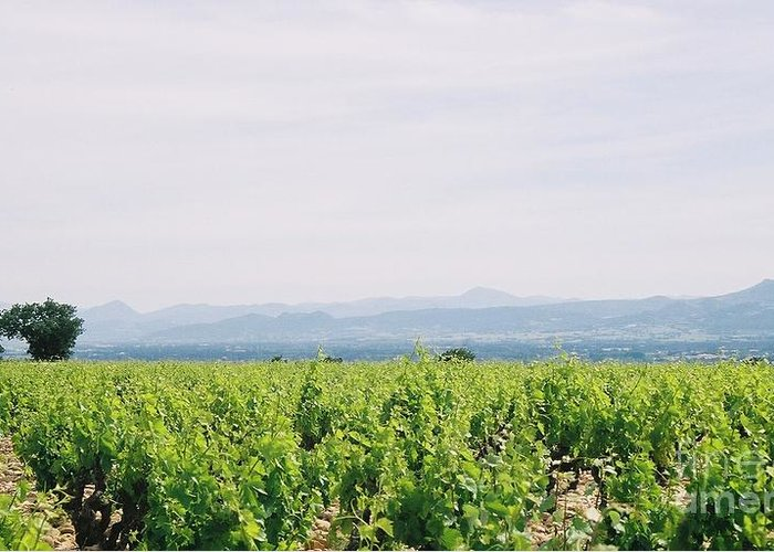 France Greeting Card featuring the photograph Provence Spring Vineyard by Nadine Rippelmeyer